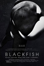 Blackfish preview